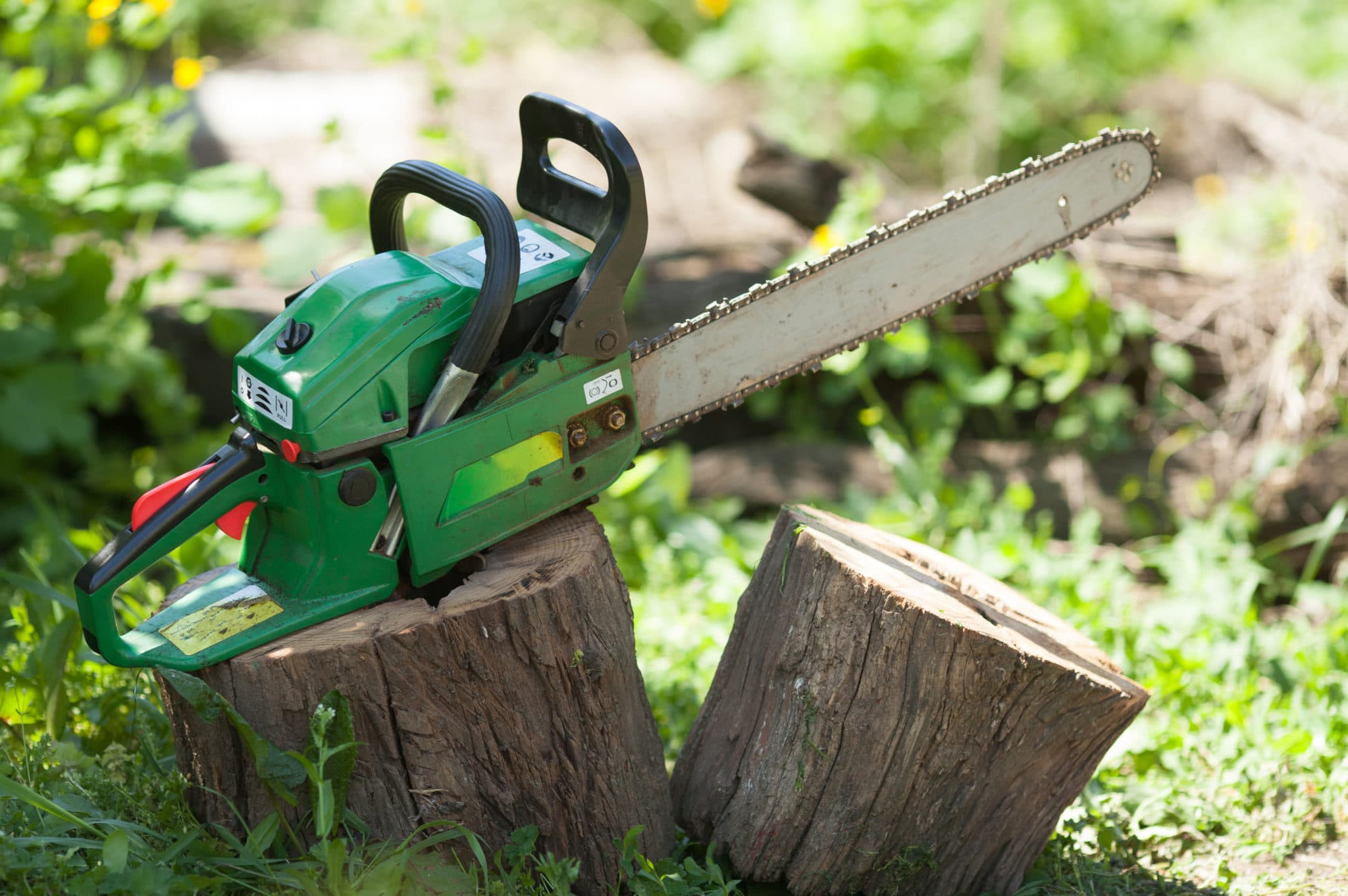 Removing & Pruning Elm Trees