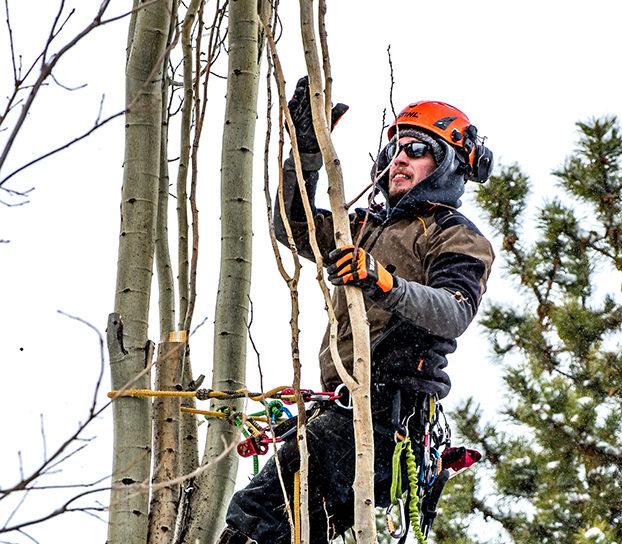 Tree Climbing Edmonton