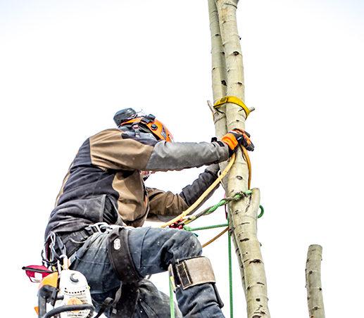 Edmonton Arborist